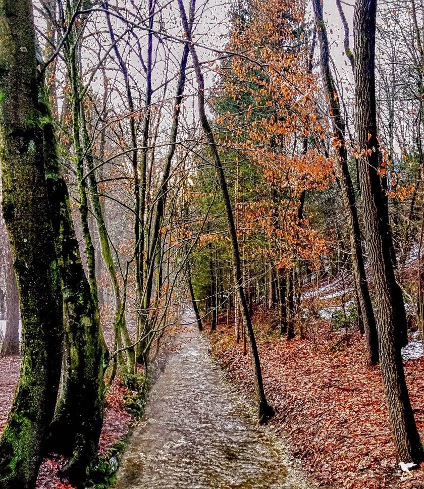 Idyllische Wege im Naturpark Warmbad-Villach