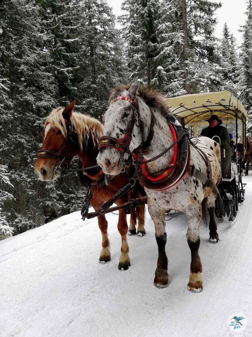 Pferdeschlittenfahrt zum Katschberger Adventweg