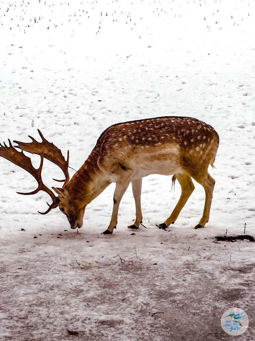 Tiere im Naturpark Warmbad-Villach